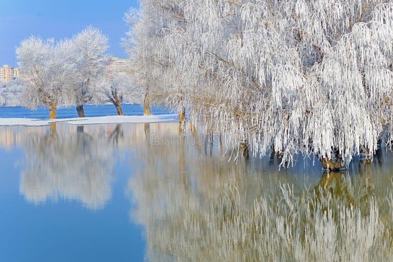 Árvores do inverno cobertas com a geada foto de stock
