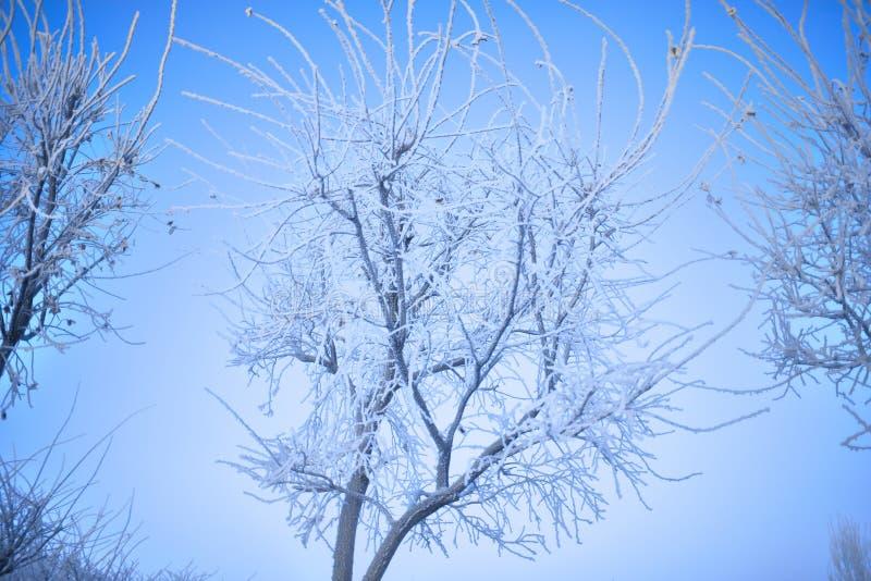 Árvores do inverno com a rima nas refeições matinais no dia frio foto de stock