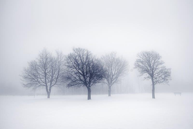 Árvores do inverno na névoa fotos de stock royalty free