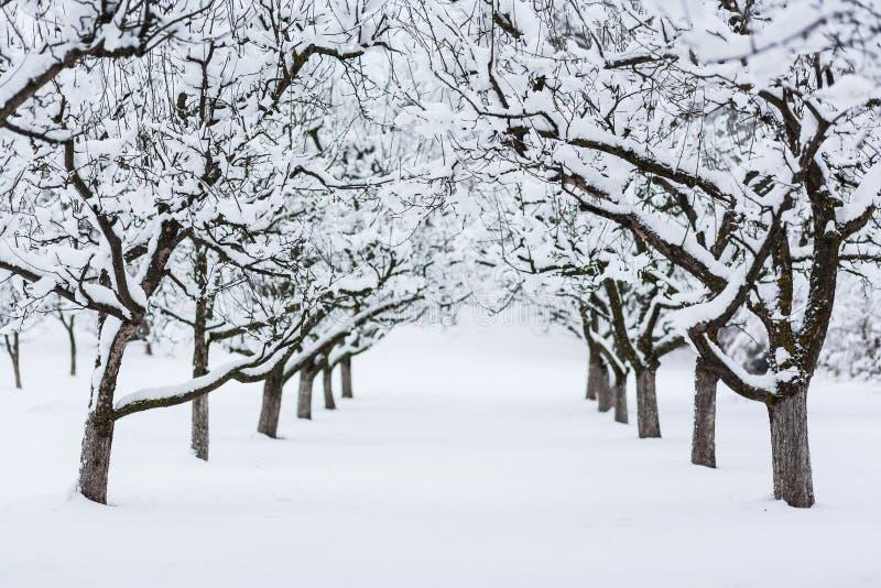 Árvores do jardim no inverno fotos de stock royalty free