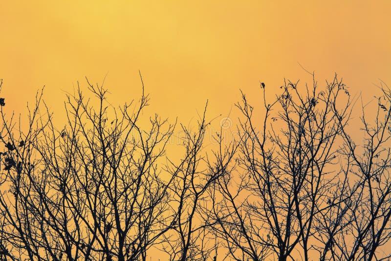 Árvores-do-mato-laranja foto de stock royalty free