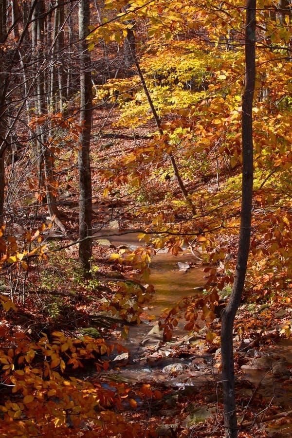 Download Árvores do outono imagem de stock. Imagem de novo, outono - 26512133