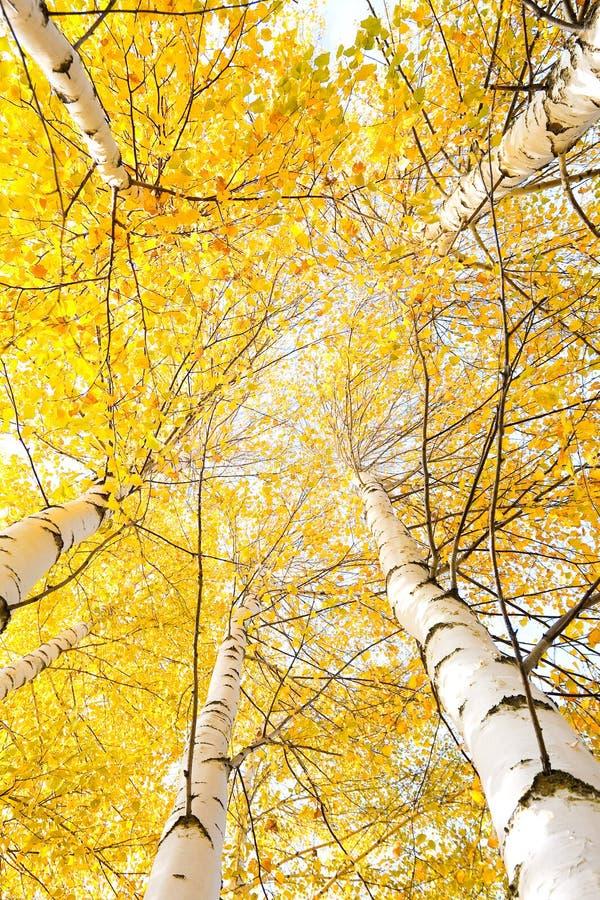 Download Árvores Do Outono Com Folhas Amarelando Imagem de Stock - Imagem de verde, alaranjado: 26524601