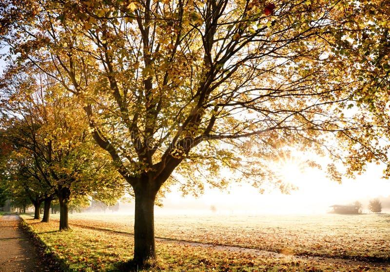 Árvores do outono com nascer do sol glorioso imagem de stock