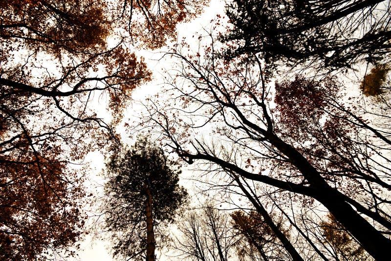 Árvores do outono da coroa foto de stock royalty free