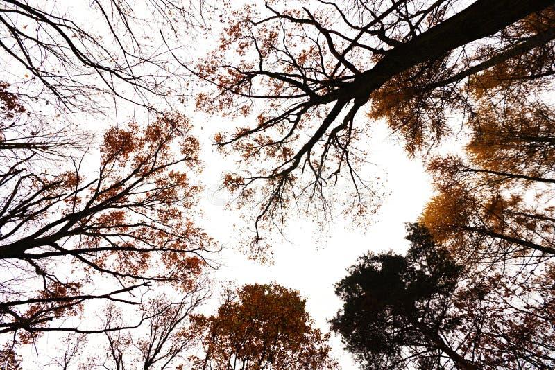 Árvores do outono da coroa imagem de stock royalty free