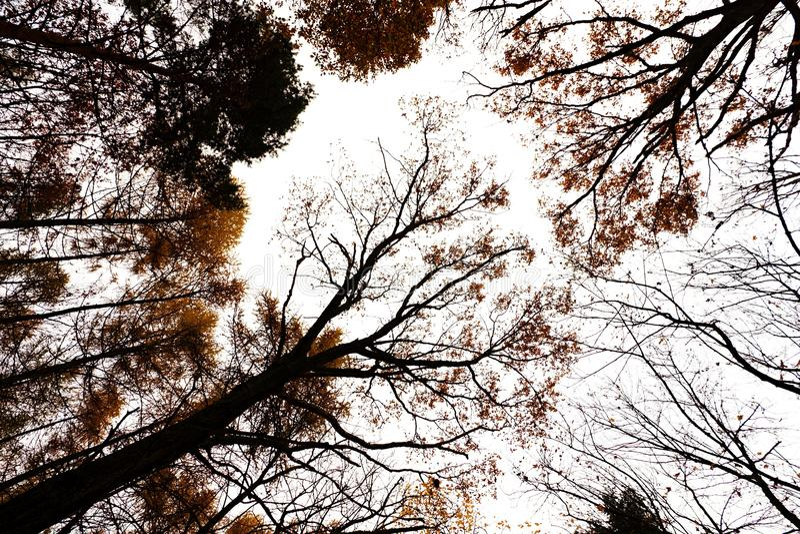 Árvores do outono da coroa fotos de stock