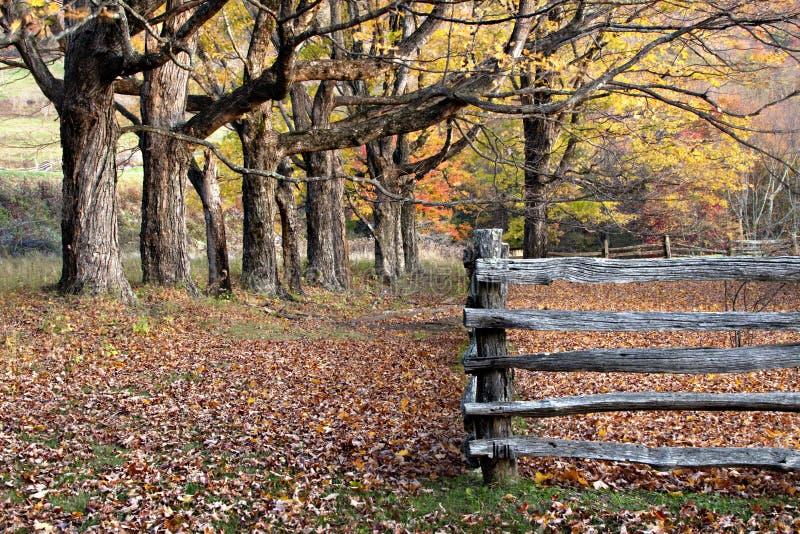 Árvores do outono, folhas e cerca de trilho rachado fotos de stock