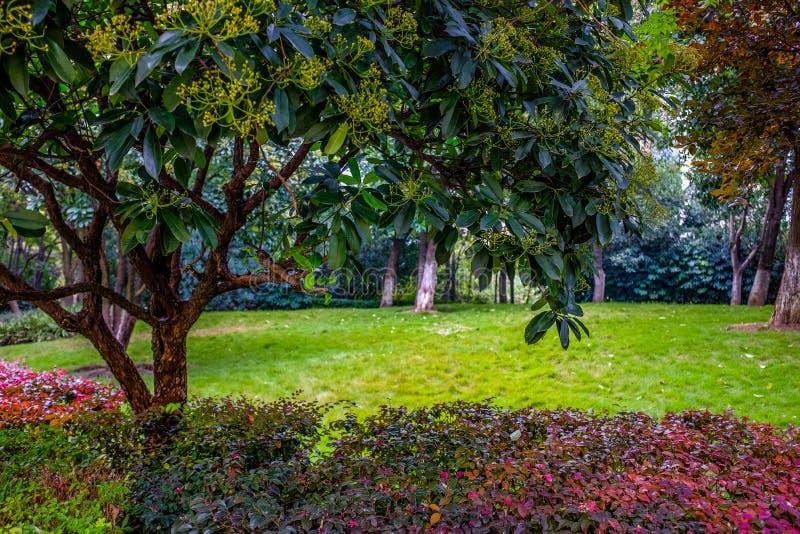 Árvores do outono no parque fotos de stock royalty free