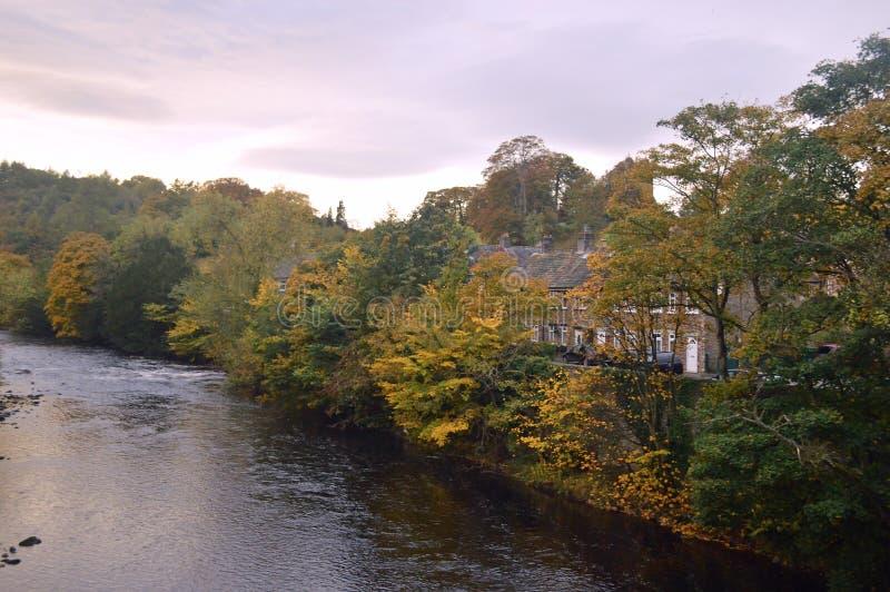 Árvores do outono pelo swale do rio imagem de stock royalty free