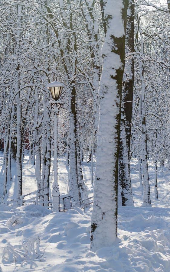Árvores do parque do inverno no tempo ensolarado da neve foto de stock