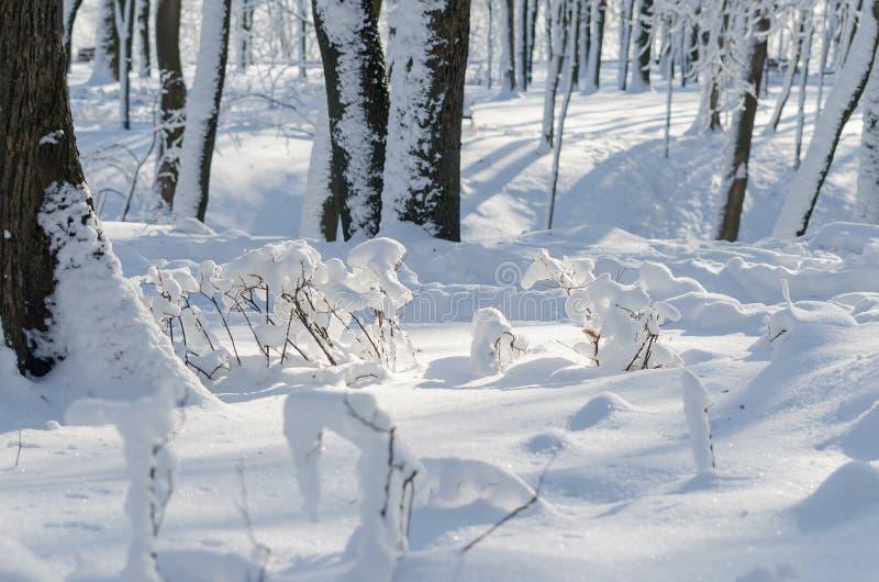 Árvores do parque do inverno no tempo ensolarado da neve fotos de stock