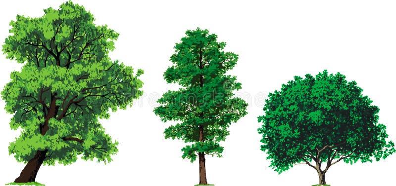 Árvores do salgueiro, do amieiro e de noz. Vetor ilustração royalty free