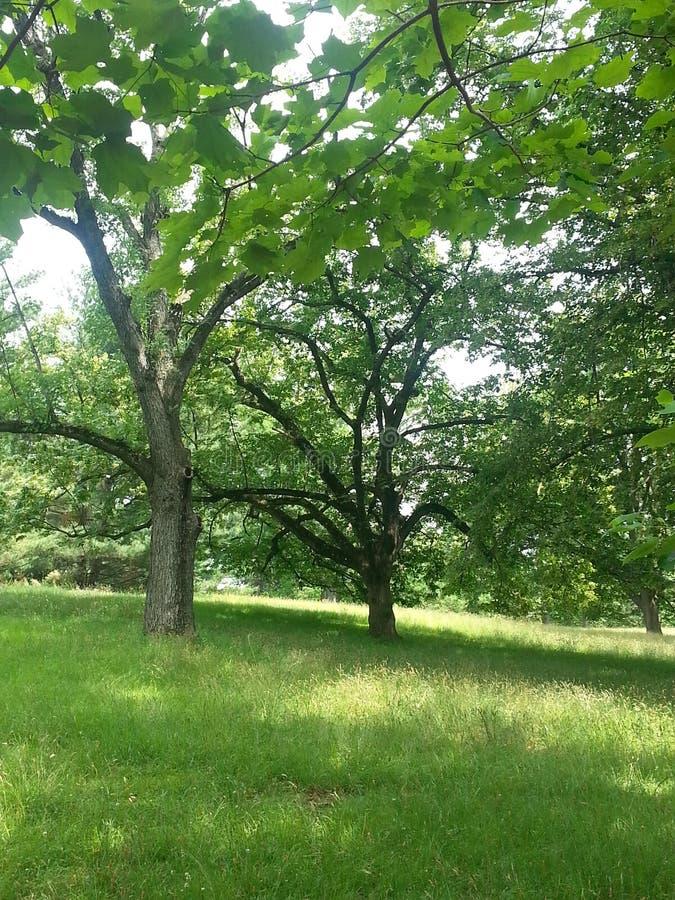 Árvores do verão fotos de stock royalty free