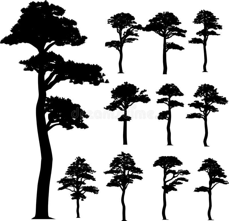 Árvores do vetor da coleção (pinho) ilustração royalty free