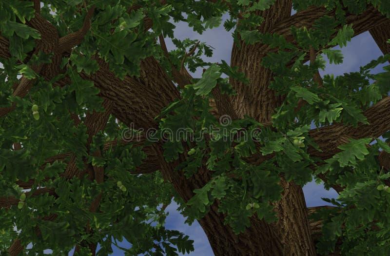 Árvores dos comp(s) imagens de stock