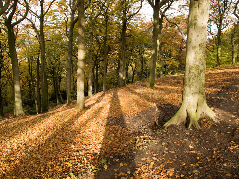 Árvores douradas de Brown do outono imagens de stock royalty free
