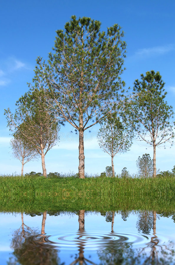 Árvores e água foto de stock
