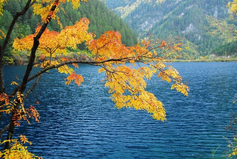 Árvores e água no outono Jiuzhai imagem de stock royalty free