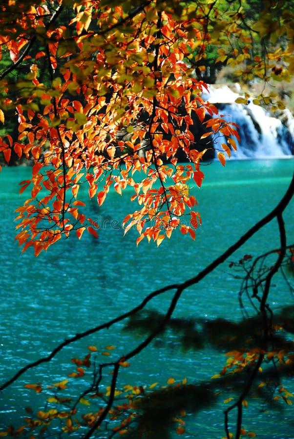 Árvores e água no outono Jiuzhai foto de stock royalty free