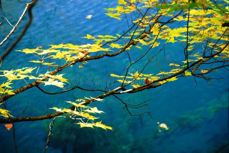 Árvores e água no outono Jiuzhai fotografia de stock