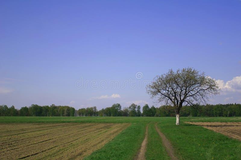Árvores e acre foto de stock