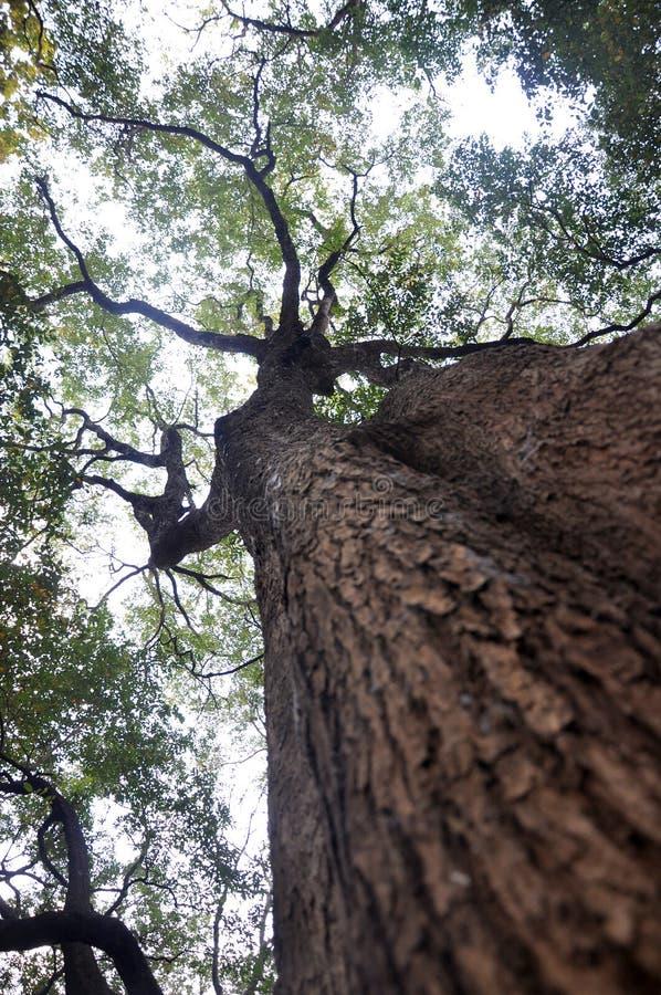 Árvores e céu foto de stock