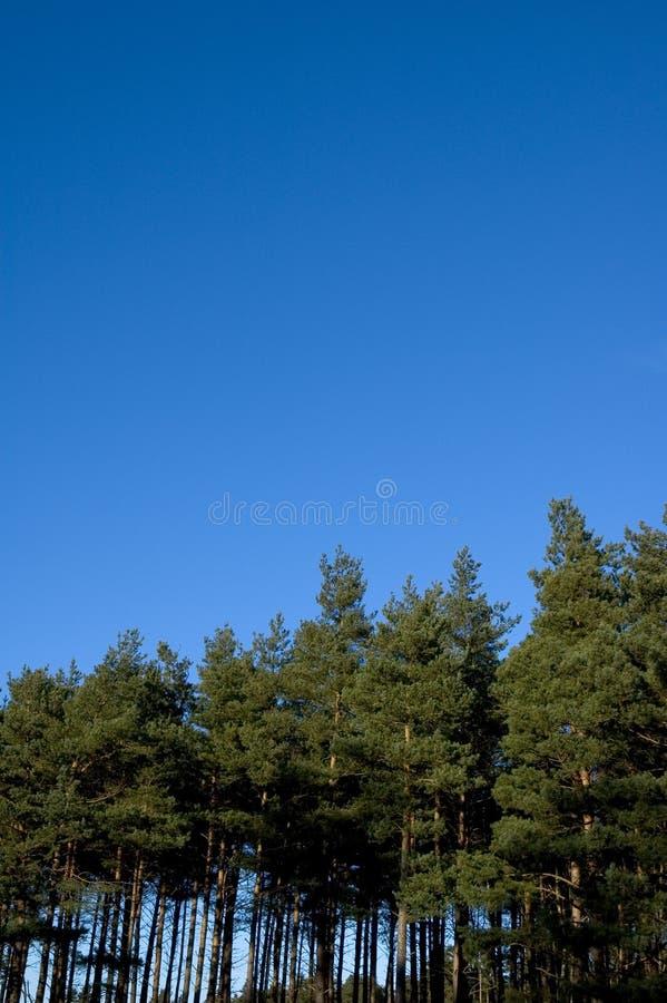 Download Árvores e céu foto de stock. Imagem de rural, céu, madeira - 63924