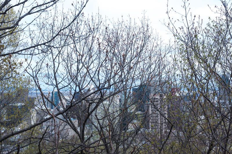 Árvores e céu azul imagem de stock royalty free