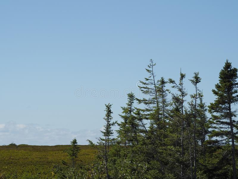 Árvores e céu azul brilhante fotografia de stock royalty free
