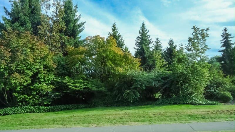 Árvores e céu da queda imagens de stock