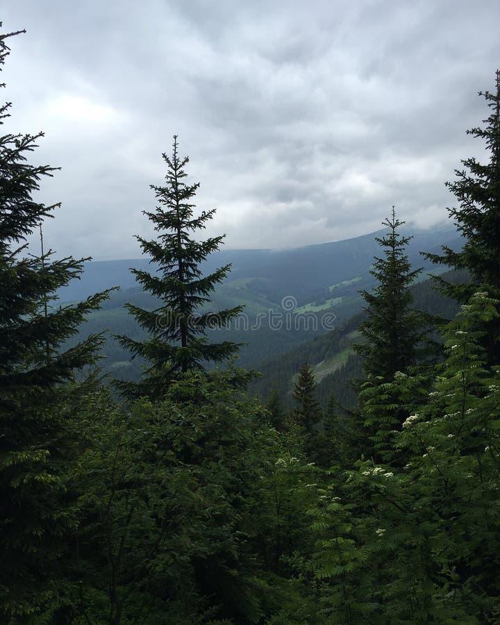 Árvores e céu nas montanhas fotos de stock
