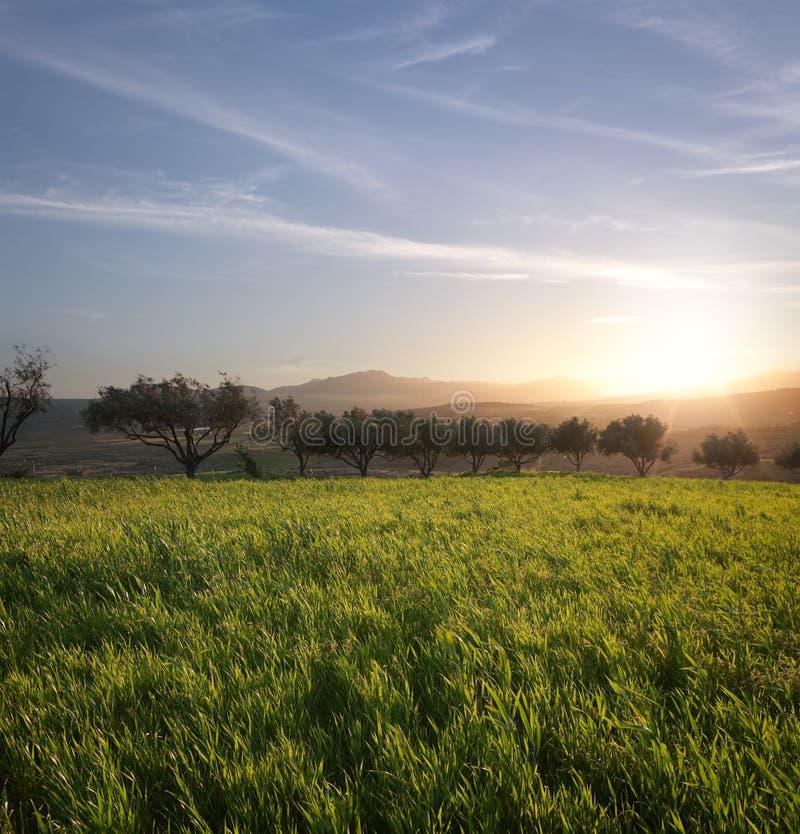 Árvores e campo da grama no por do sol imagens de stock royalty free