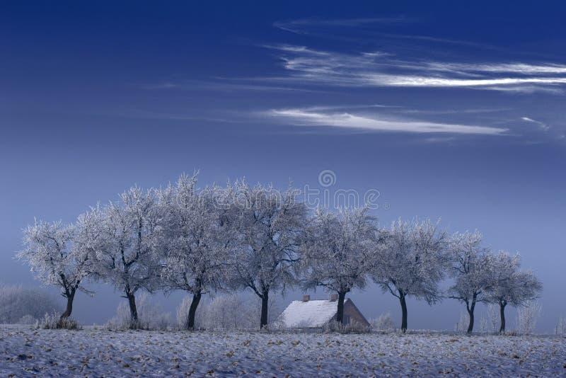 Árvores e casa no inverno fotografia de stock royalty free