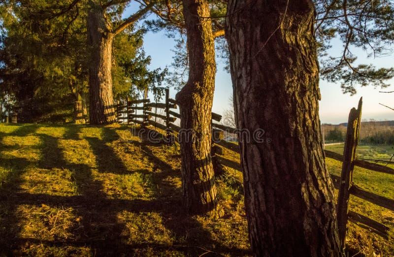 Árvores e Cedar Fence na luz do sol da noite imagens de stock royalty free