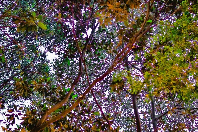 Árvores e contextos coloridos fotos de stock royalty free
