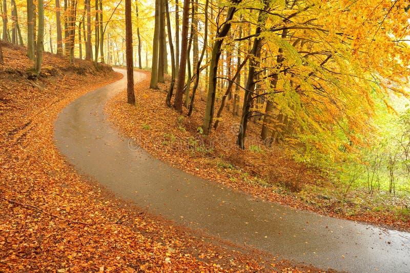 Árvores e estrada bonitas do outono fotos de stock