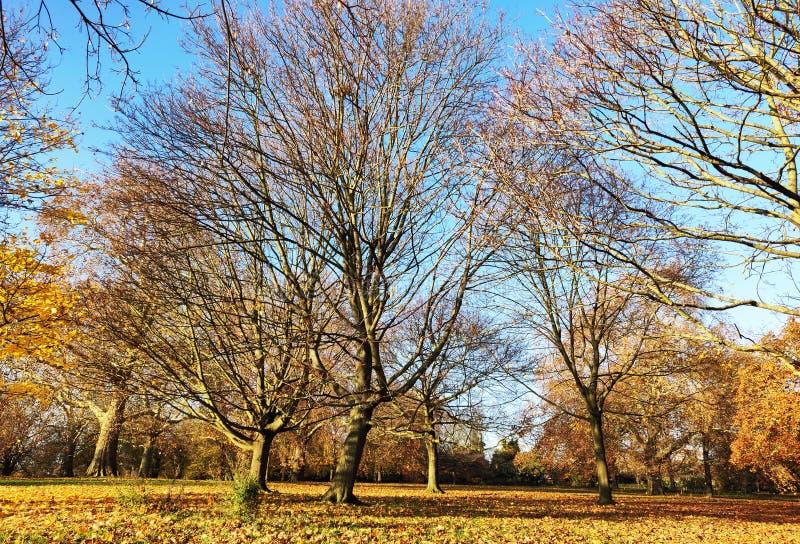 Árvores e folha Leafless no outono fotos de stock