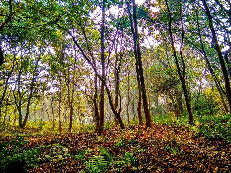 Árvores e folhas falled na manhã durante o nascer do sol imagem de stock royalty free