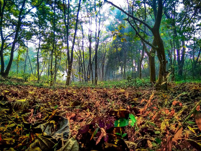 Árvores e folhas falled na manhã durante o nascer do sol foto de stock royalty free