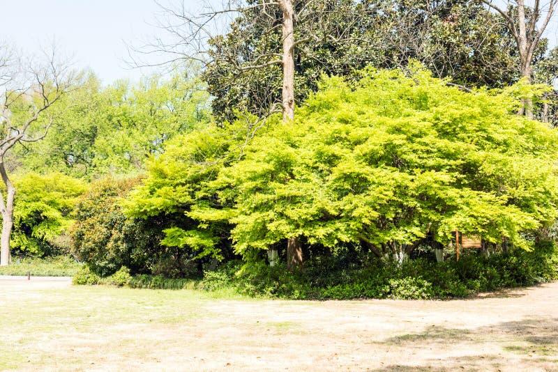 Árvores e folhas verdes do vermelho fotografia de stock