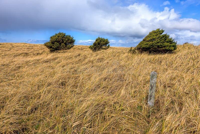 Árvores e grama em um dia ventoso imagens de stock royalty free