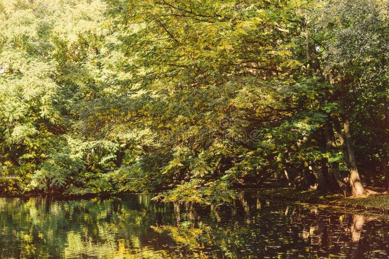 Árvores e lago no outono fotografia de stock royalty free