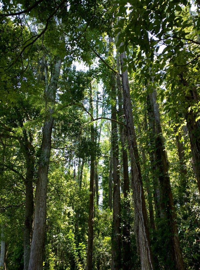 Árvores e luz imagem de stock royalty free