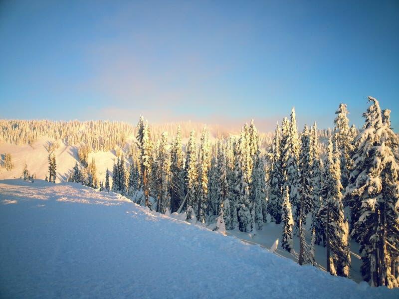Árvores e a neve fotos de stock