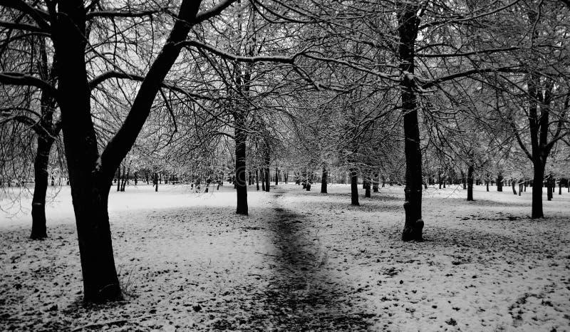 Árvores e neve fotos de stock royalty free