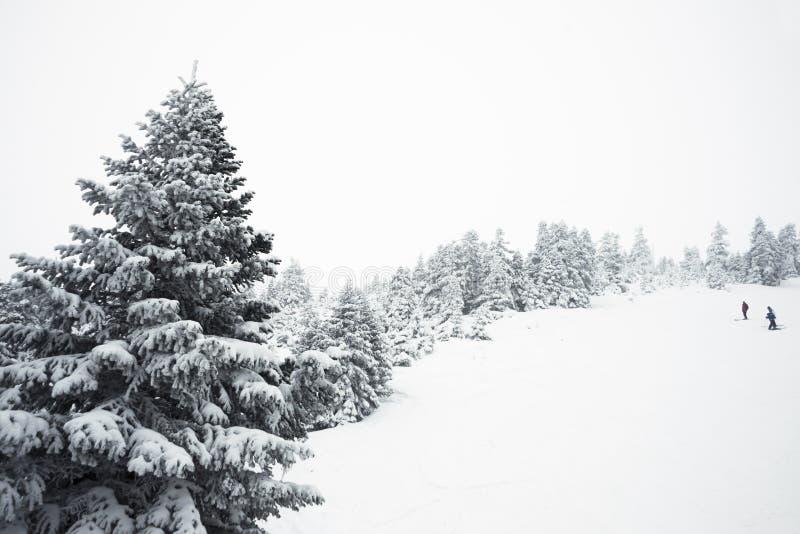Árvores e neve de pinho imagens de stock