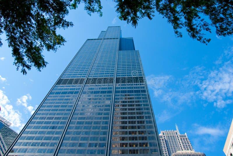 Árvores e o Sears Tower fotografia de stock