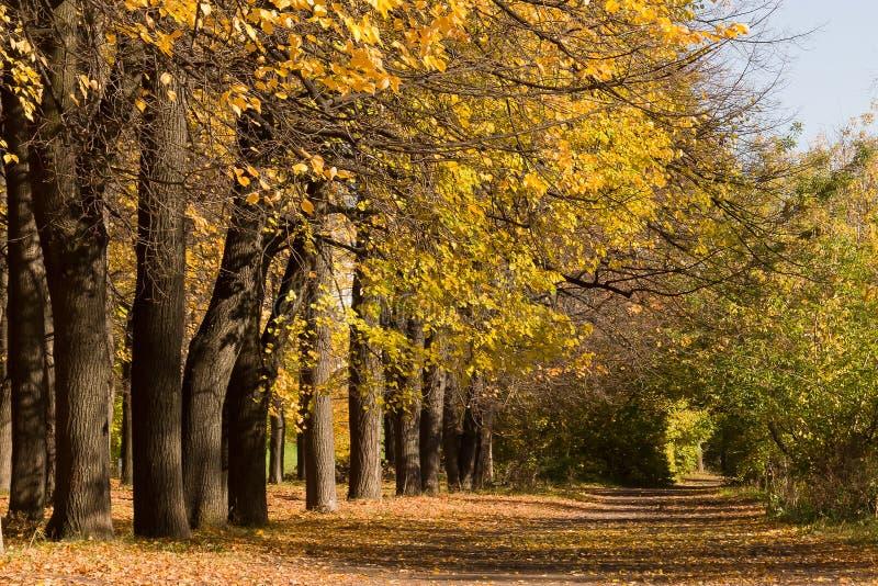 Árvores e passeio amarelados no parque da cidade imagens de stock royalty free