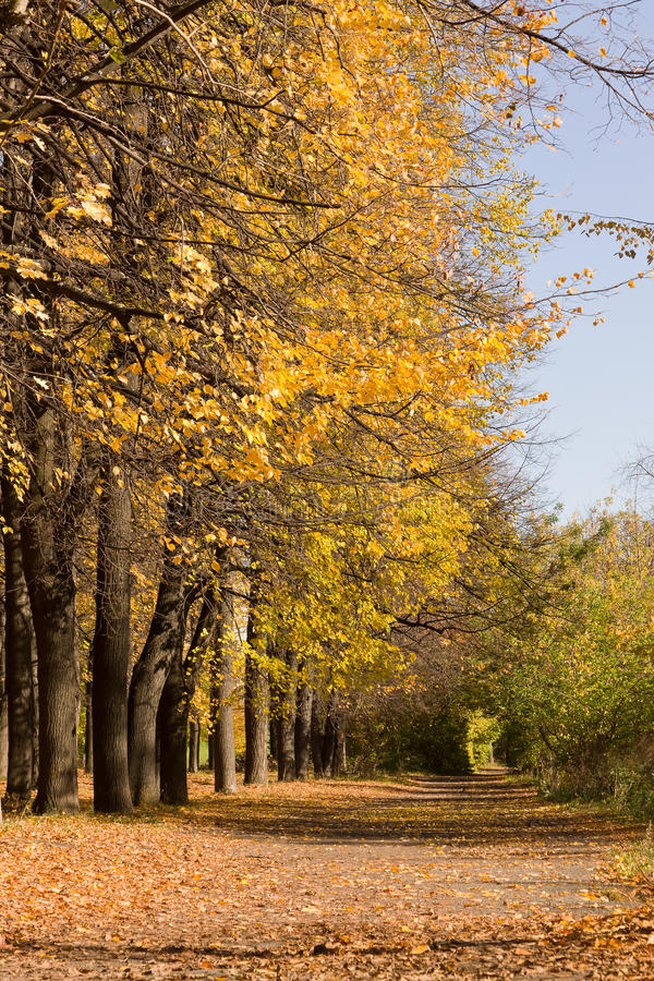Árvores e passeio amarelados no parque da cidade, vertical foto de stock